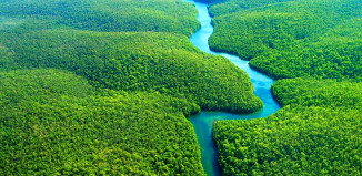Amazon forest