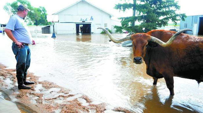 Livestock Protection During Hurricane