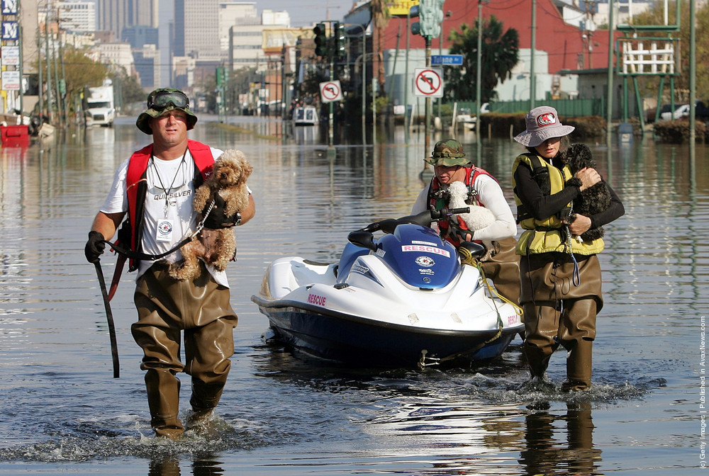 Pets safety  during hurricane