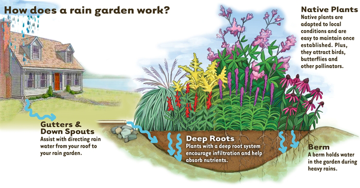 3 Techniques to Reduce Stormwater Runoff In Your Garden and ... on rain garden design for homeowners, rain garden design ideas, rain garden design software, native garden design diagrams, rain garden design templates, rain garden design calculations, rain garden planting design for maryland, landscaping diagrams, rain barrel diagram, sustainable architecture design diagrams, rain garden design sketch, rain architecture diagrams, rain water retention plans, catch rain diagrams, rain shadow, stormwater management diagrams,