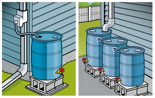 rain barrels installed close to a downspout pipe